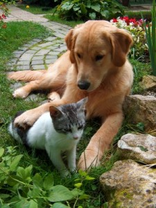 summer dangers, cat and dog | the healthy pet club