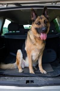 travel-tips-dog
