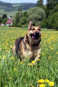 vivitonin_dog_running