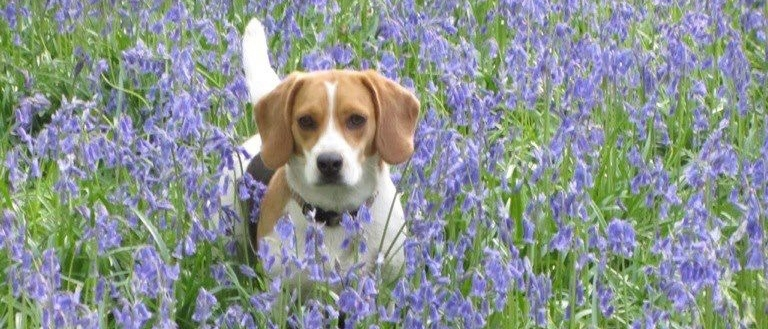 molly-bluebells1