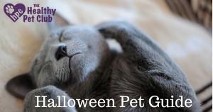 Hallowe'en Pet Guide