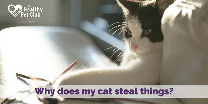 Why does my cat steal things-