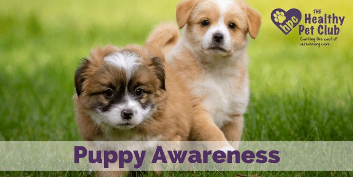 puppy-awareness