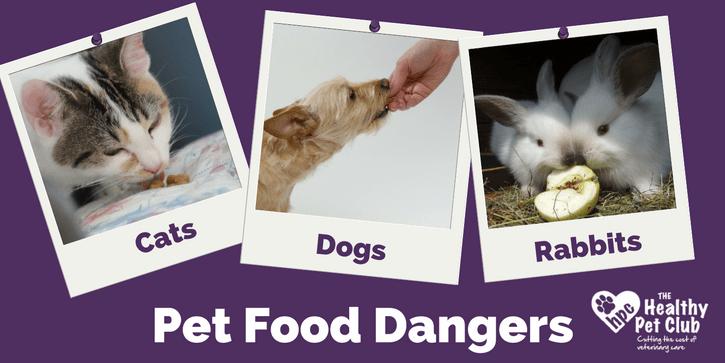 pet-food-dangers