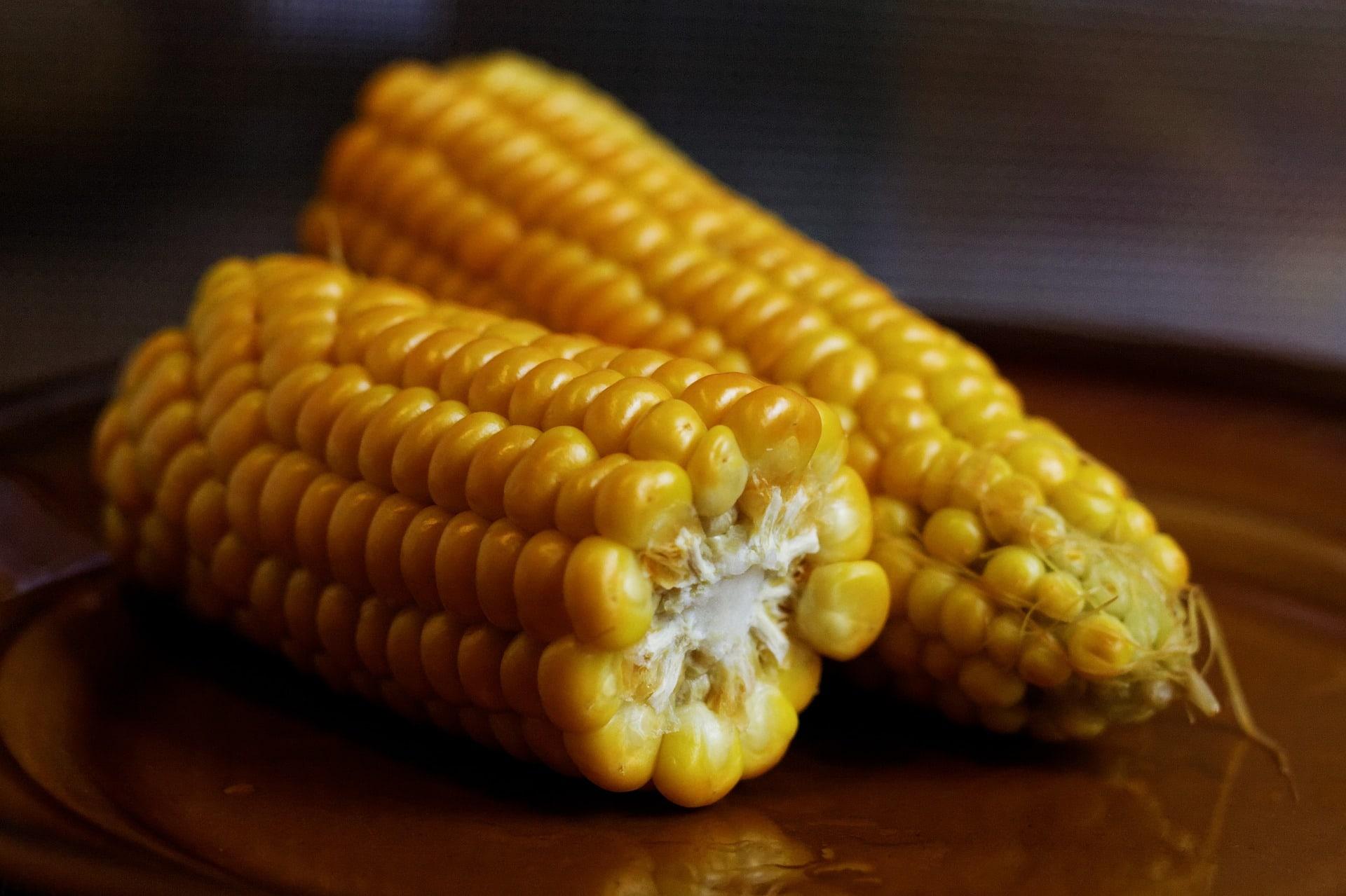 corn-on-the-cob-932857_1920