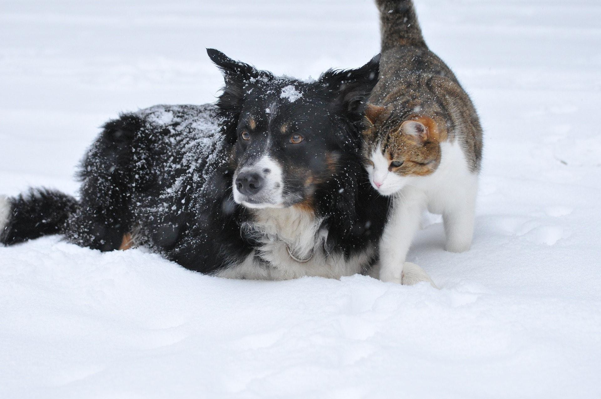 dog-1755423_1920