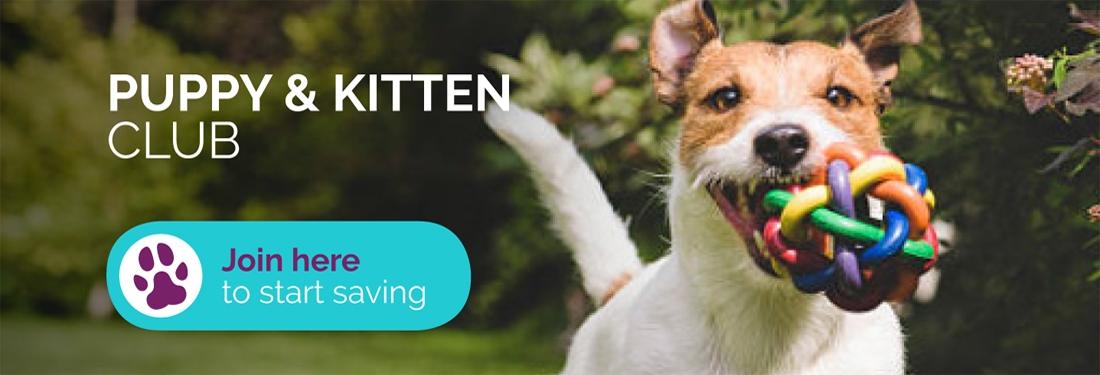 dog-kitten-club