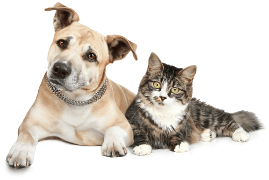 Pets At Home Neutering Cats Prices
