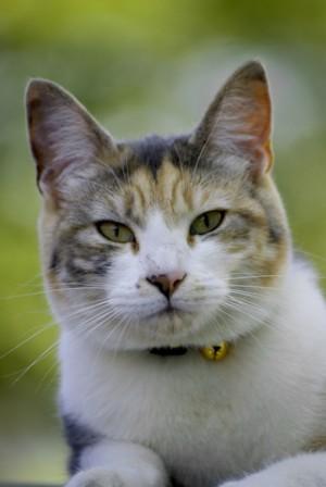 vidalta-cat