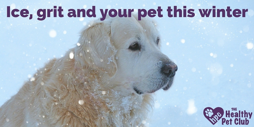 Ice, grit and your pet this winter (1)