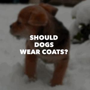 doggys_coat