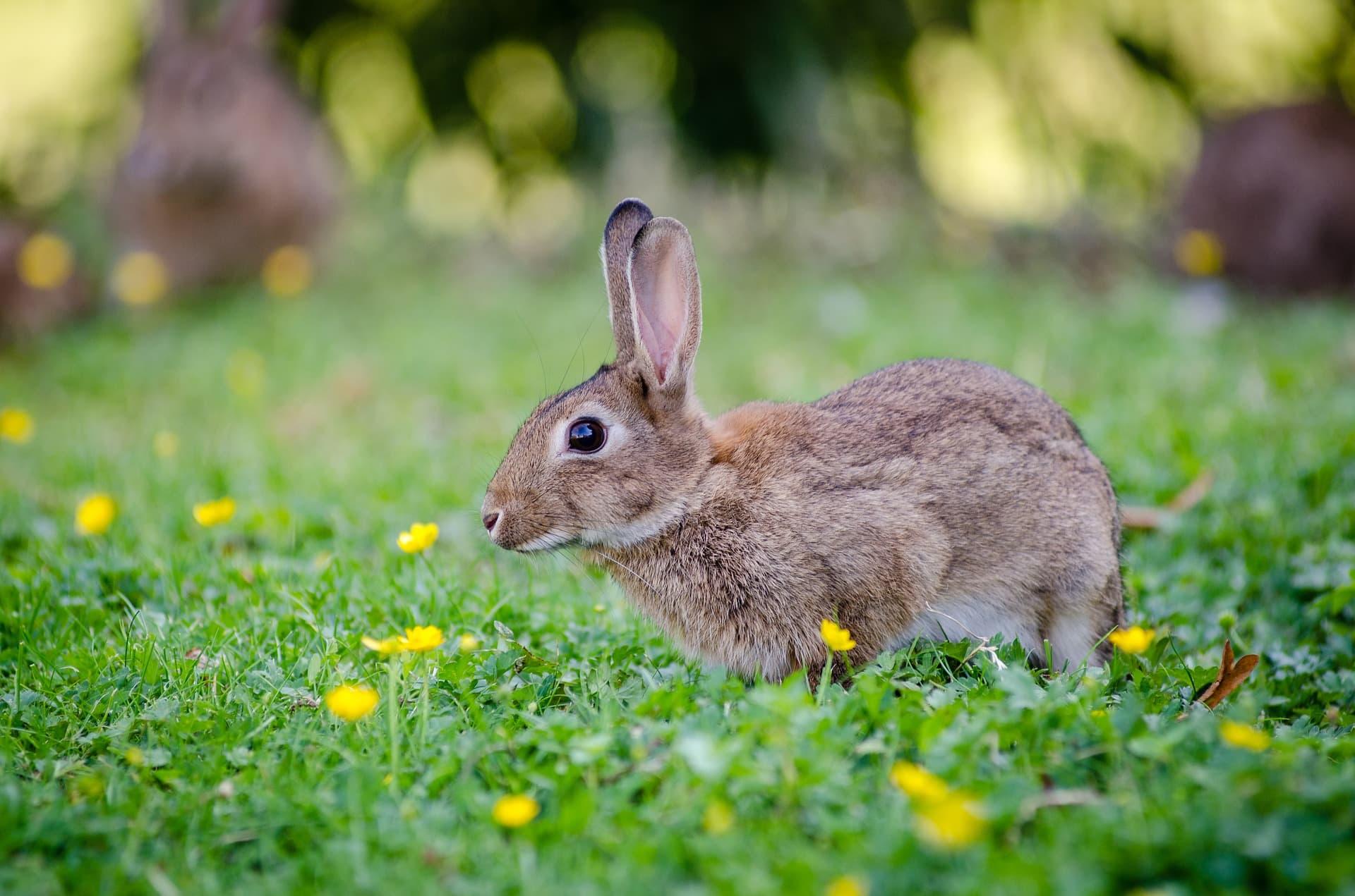 Poisonous Plants And Your Rabbit