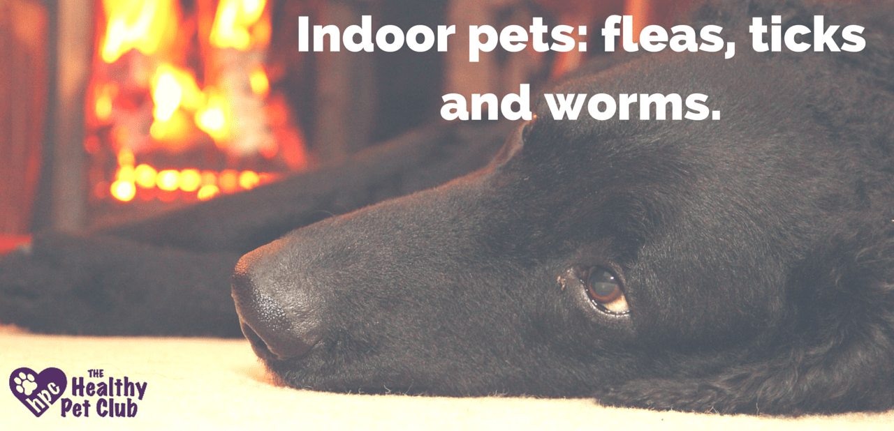 do indoor pets need protection