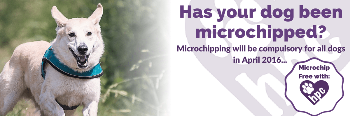 Is your dog microchipped- (3)