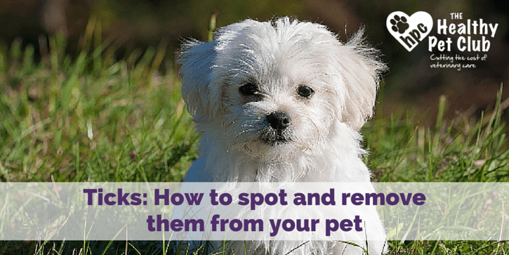 Ticks- How to spot and remove them from your pet (7)