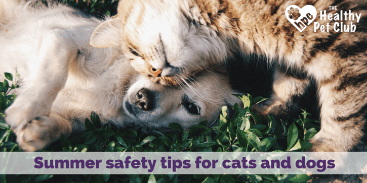 Summer safety tips for cats and dogs (2)
