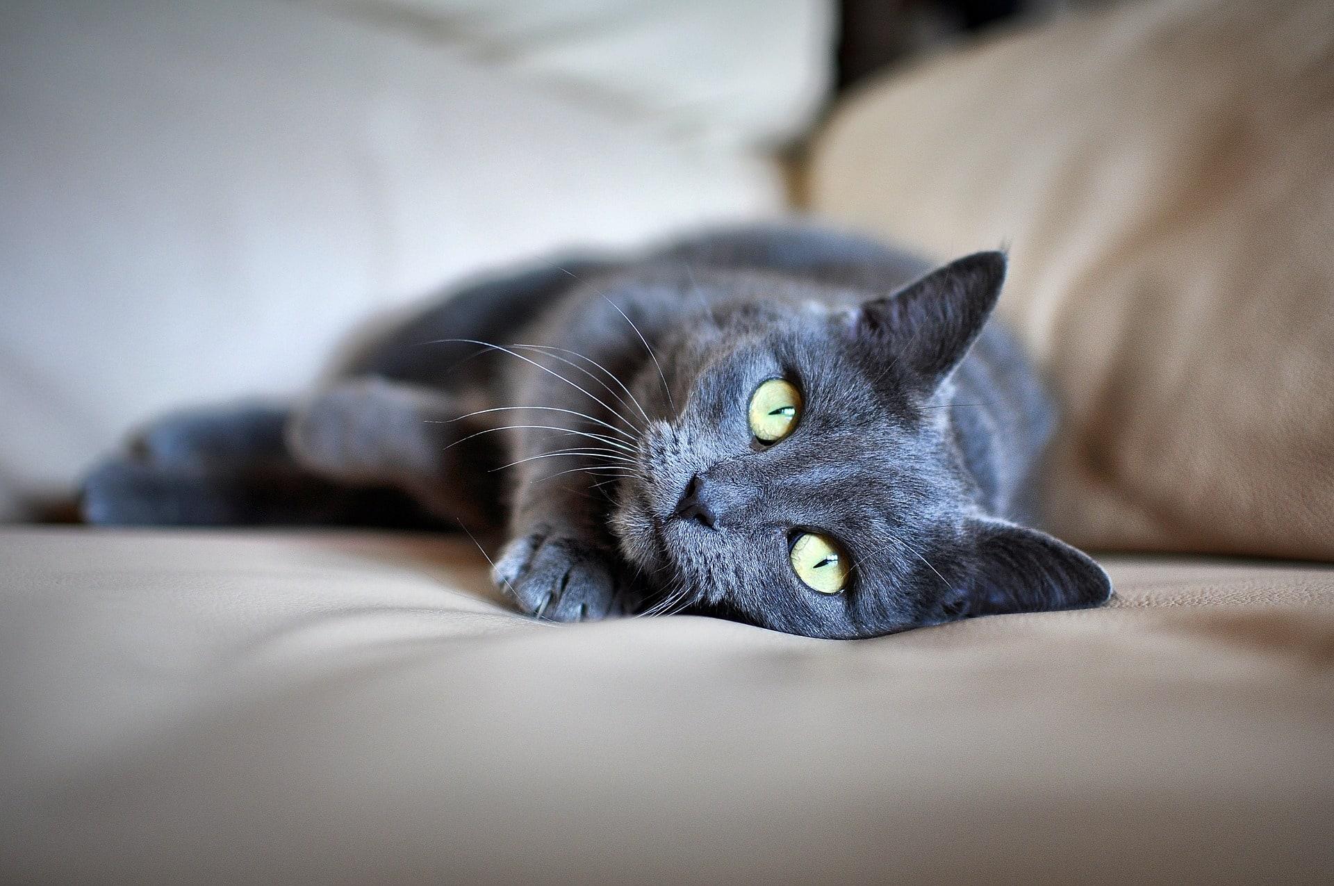 Self Medicating Your Pet The Healthy Club Counterpain Medium Cat 1377984 1920