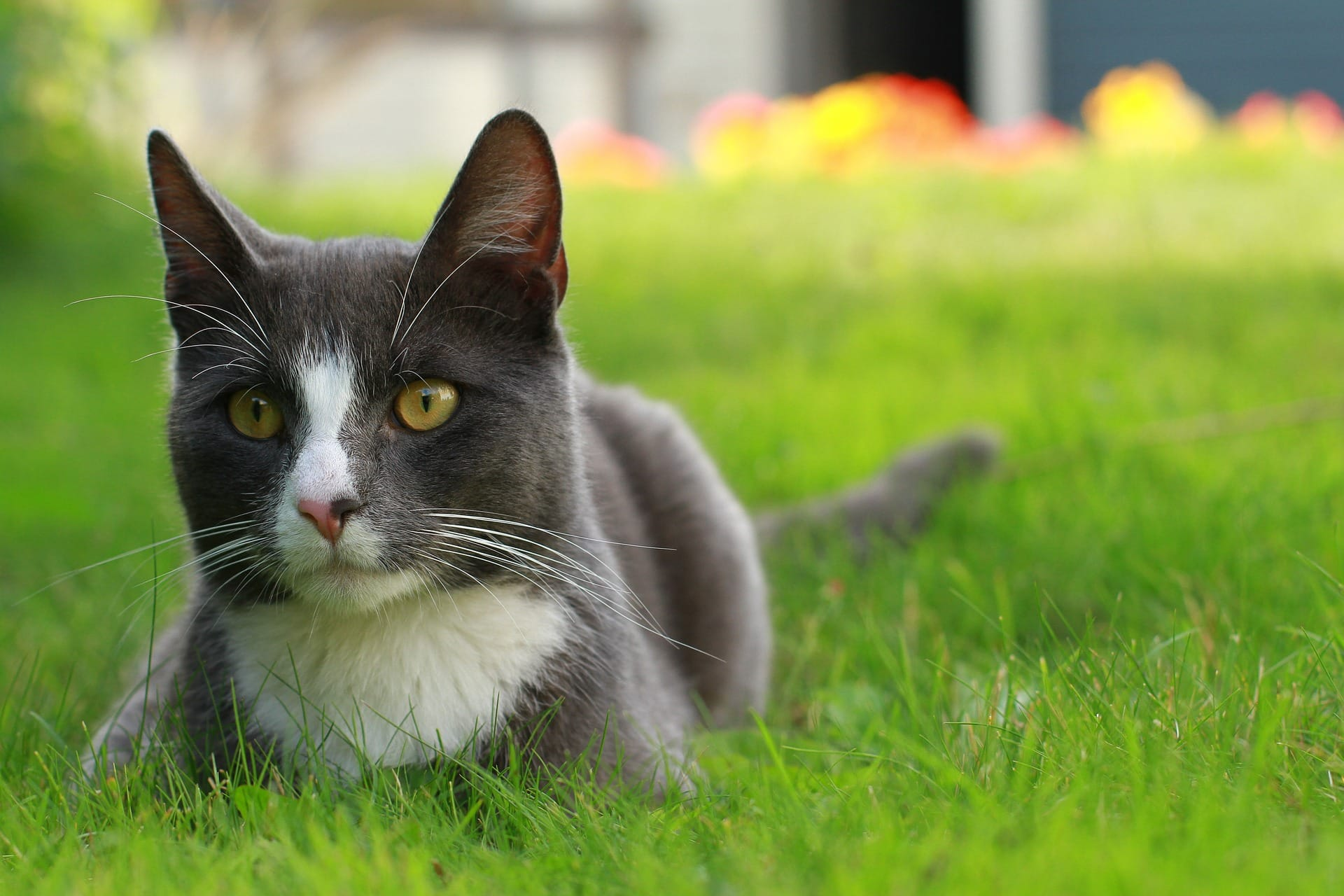 Can I Neuter My Cat At  Months