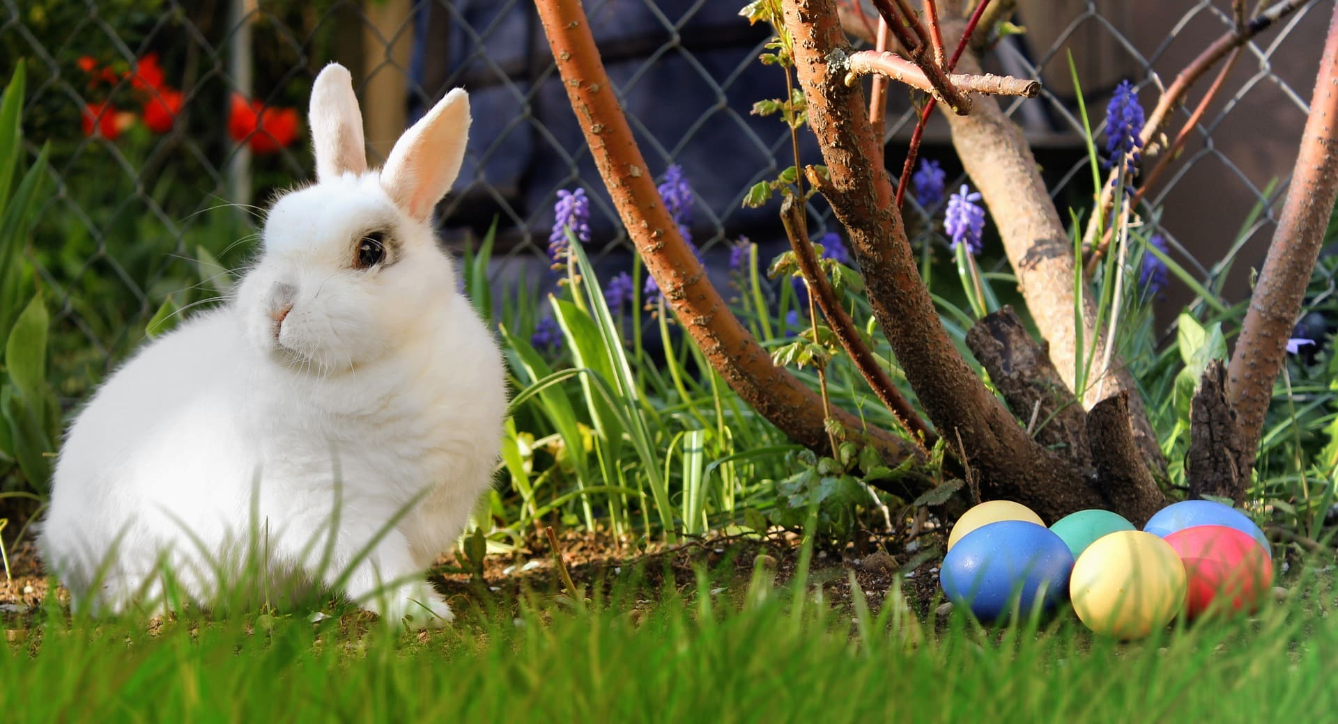 Easter Dangers - The Healthy Pet Club