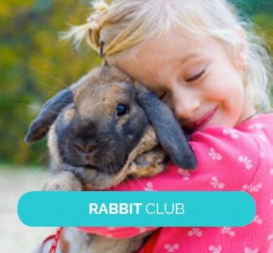 3-rabbit