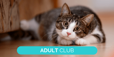 Adult club advertising landing page