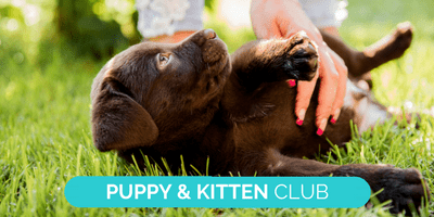 Puppy and Kitten club advertising landing page