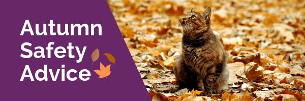pet autumn safety advice