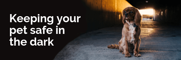 Keeping your pet safe in the dark