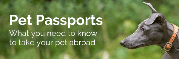 pet passports what you need to know to take your pet abroad