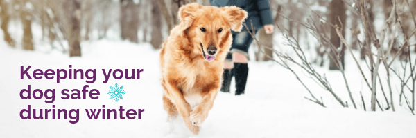 Keeping your dog safe during winter