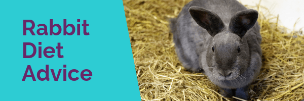 Rabbit diet advice