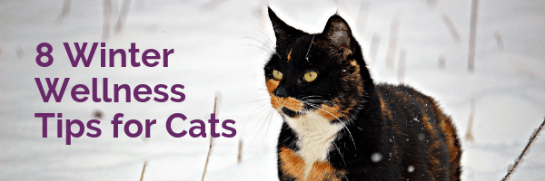 8 winter wellness tips for cats