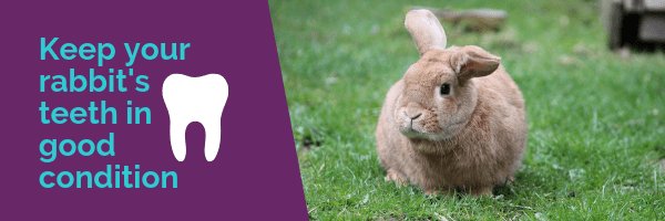 Keep your rabbit's teeth in good condition