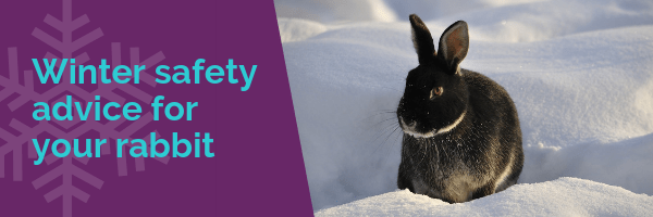 Winter safety advice for your rabbit