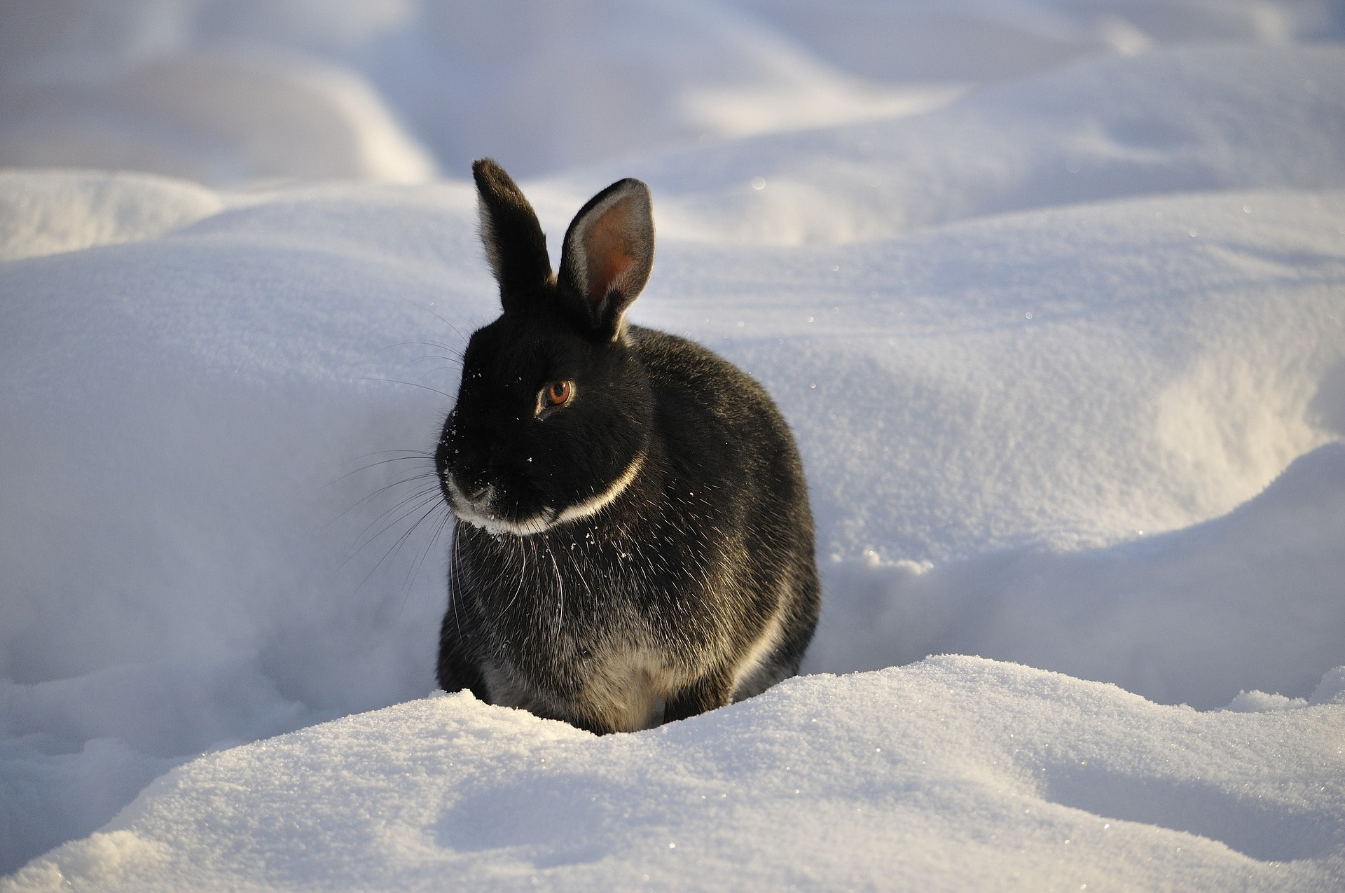 winter safety advice for your rabbit the healthy pet club. Black Bedroom Furniture Sets. Home Design Ideas