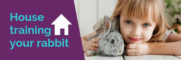 House training your rabbit
