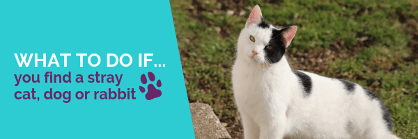 What to do if you find a stray cat, dog or rabbit