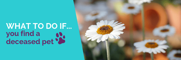 what to do if you find a deceased pet