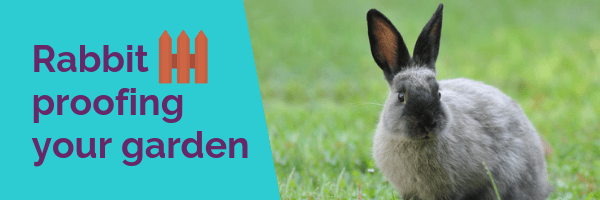 Rabbit proofing your garden