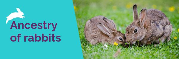 history of rabbits