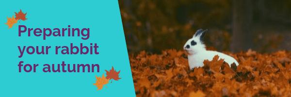 Preparing your rabbit for autumn