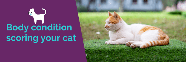 Body condition scoring your cat