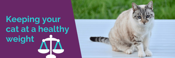 Keeping your cat at a healthy weight