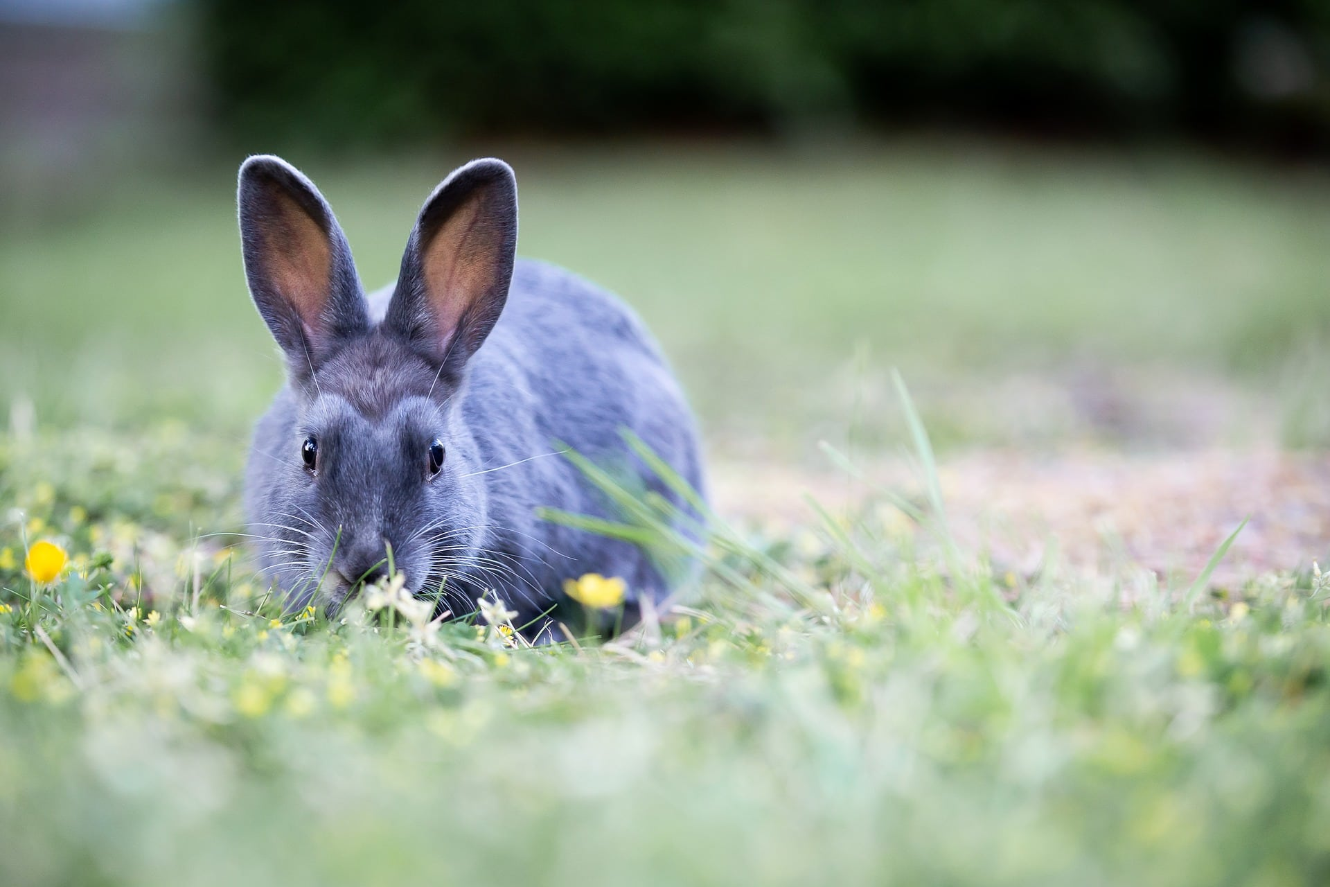 Body condition scoring your rabbit - The Healthy Pet Club
