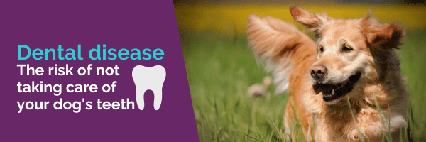 Dental disease the risk of not taking care of your dogs teeth