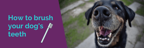 How to brush your dogs teeth and why you should do it