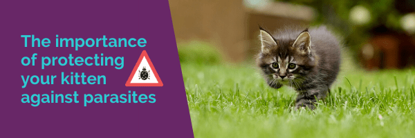 The importance of protecting your kitten against parasites