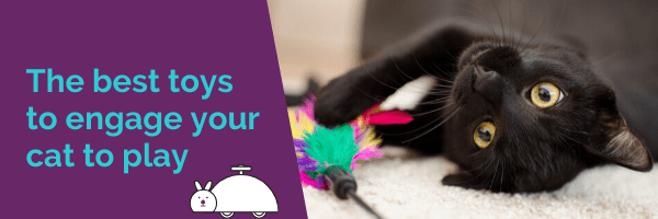 The best toys to engage your cat to play
