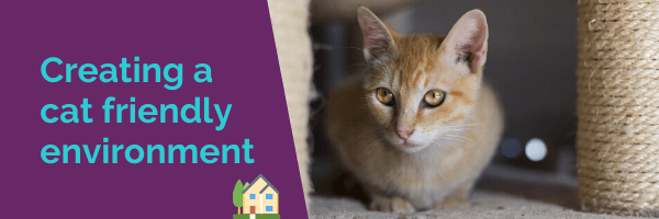 Creating a cat friendly environment