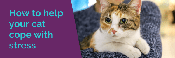 How to help your cat cope with stress